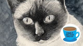 Daily Sketch Show - Cat