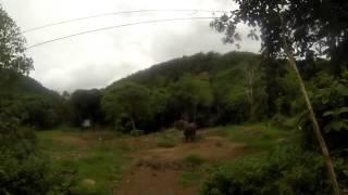 Elephants In Koh Lanta Island Thailand
