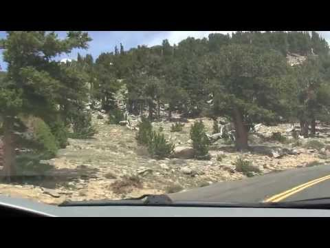 The Descent--Part 3 (Re-Entering the Tree Line)