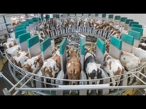 Amazing Automatic Milking Machines CHEESE And MILK - Fast Workers Food Processing Dairy Factory 2017
