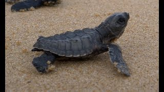 Saving Sea Turtles on World Sea Turtle Day! by The Humane Society of the United States