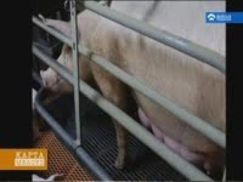 Για το τέλος των κλουβιών στην κτηνοτροφία.Μια Ευρωπαϊκή πρωτοβουλία πολιτών(13/10/2018)