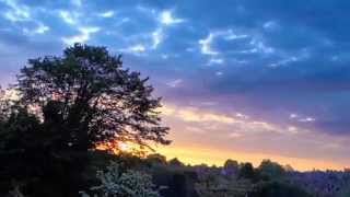 Sunrise Time Lapse over London suburb treetops, UK