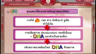 สื่อการเรียนการสอน ยีนและสารพันธุกรรม ตอนที่ 3 ม.3 วิทยาศาสตร์