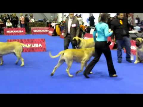 Brno Europa Winners Dogs Show Czech Republic 25.10.2015