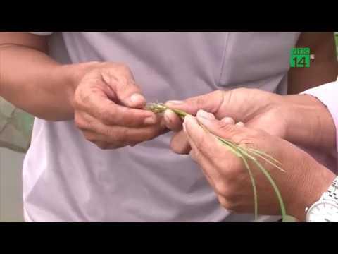 Nam bộ: Hàng nghìn ha lúa bị ngập úng do mưa lớn | VTC14
