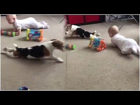 Hund krabbelt mit Baby