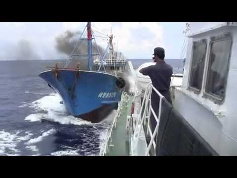 0 Chinese, Japan Ship Collision   Video Now Up