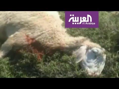 العرب اليوم - لم تفلت الحيوانات من فتكهم وبطشهم الهمجي