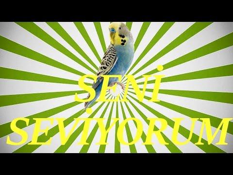 Video SENİ SEVİYORUM SES Papağan ve Muhabbet Kuşu Konuşturma Sesi Ses Kaydı 1 SAAT download in MP3, 3GP, MP4, WEBM, AVI, FLV January 2017