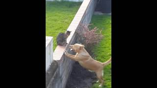 Loki and the neighbours cat - YouTube