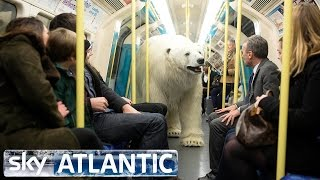 Niedźwiedź polarny na wolności w Londynie