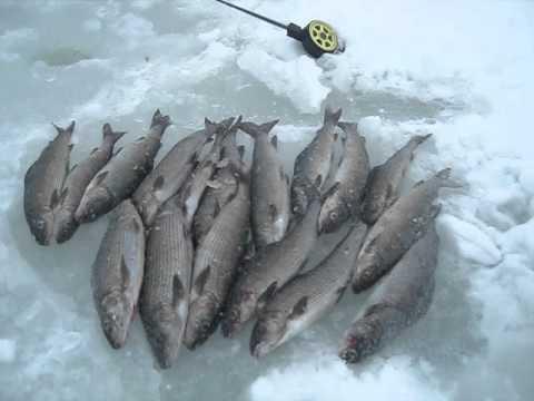 рыбалка на реке сегежа карелия видео