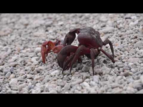 Speel Duiken bij Christmas Island af