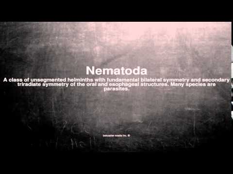 Medical vocabulary: What does Nematoda mean