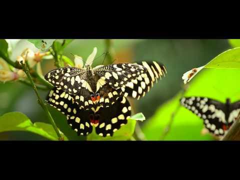 lo splendore della casa delle farfalle a bordano