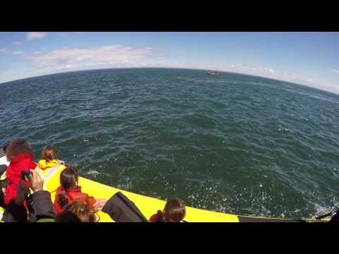 Niesamowite wideo! Płetwal błękitny, który miał ochotę połknąć turystów!