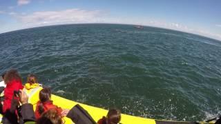 Niesamowite nagranie! Płetwal błękitny, który chciał pożreć turystów!