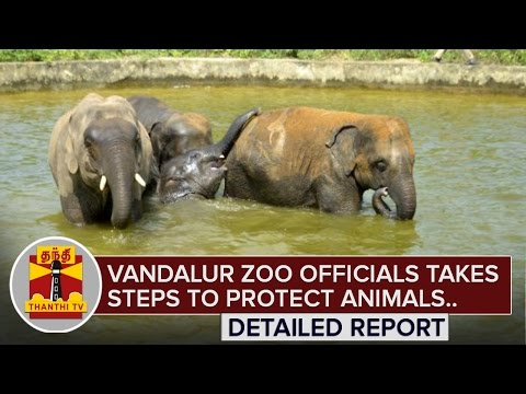 Vandalur-Zoo-Officials-takes-steps-to-Protect-Animals-from-Summer-Heat-ThanthI-TV