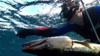 Подводная охота на Кубе часть 2. Spearfishing In Cuba