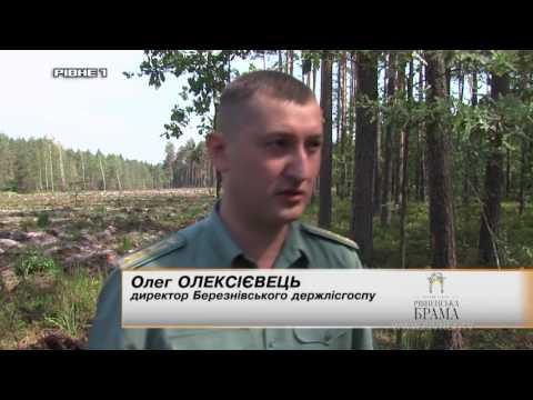 Ліси Рівненщини під загрозою загибелі [ВIДЕО]