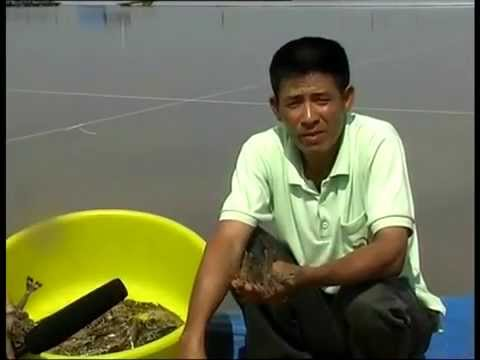 Hygiene and safety of farmed shrimp in Vietnam technical and commercial) – in Vietnamese
