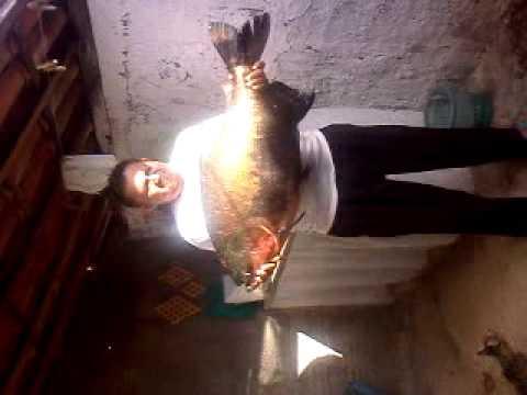 dudu pesca tambaqui de 14 kg em belem de brejo do cruz -pb