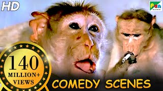 Monkey Funny Scene | Comedy Scene | Jawab Hum Denge | Jackie Shroff, Shatrughan Sinha, Sridevi | HD full download video download mp3 download music download