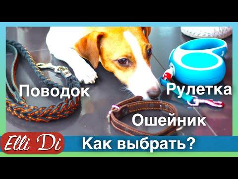 Поводки рулетки для собак недорого купить в интернет магазине