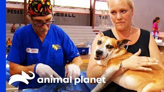Vets Provide Much Needed Care To Remote Mayan Village | Dr. Jeff: Rocky Mountain Vet by Animal Planet