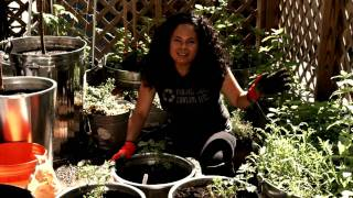 Patti Moreno plants Grape Vines in her container garden, continuing her edible landscape project at her Boston Urban Farm. Visit: http://www.gardengirltv.com ...