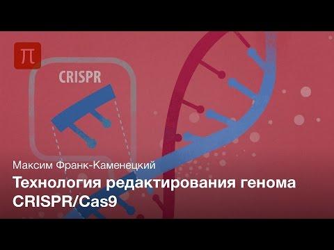 Пресс-лекция | Технология редактирования генома CRISPR/Cas9