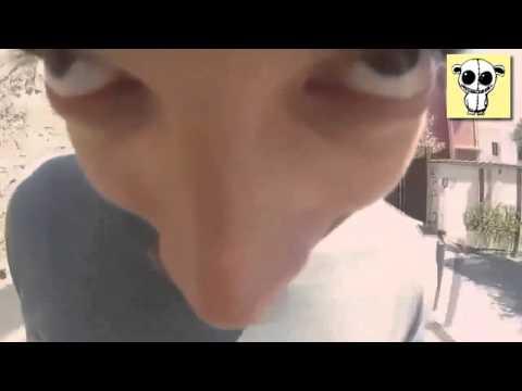 Chacarron Macarron FAN VIDEO 2015