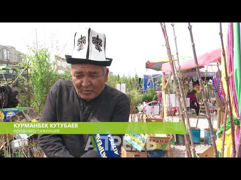 Сколько стоят саженцы деревьев на рынке \\\\ 17.04.2018 \\\\ Апрель ТВ - DomaVideo.Ru