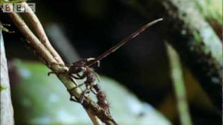 Download Youtube: Cordyceps: attack of the killer fungi - Planet Earth Attenborough BBC wildlife