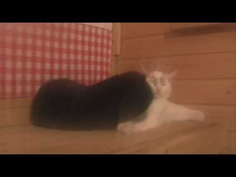 Video Catman and sauna download in MP3, 3GP, MP4, WEBM, AVI, FLV January 2017