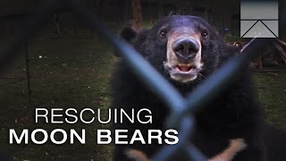 Discovery Channel - Bear Bile Farming