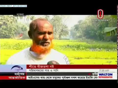 Rice cultivation: Seed beds damaged in cold (19-01-2017)