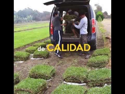 PRECIOS BAJOS DE GRASS