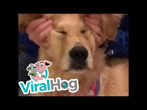 Aaah, koira nautiskelee naamahieronnasta