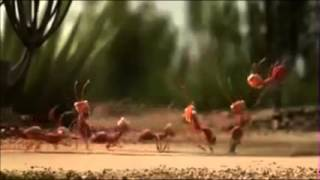 Inteligent Ants Strategy Plan