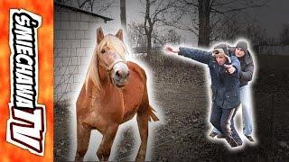 """Koń """"u Szwagra"""" – VideoDowcip"""