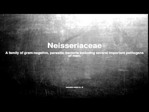 Medical vocabulary: What does Neisseriaceae mean