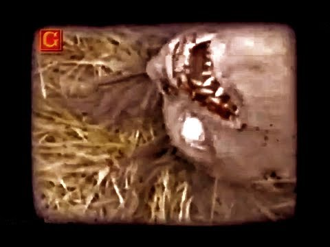 Footage - Hello! It´s Mary, Add to Favorites & Subscribe: http://goo.gl/9bztXD Best Mystery Videos: http://amazingmysteryvideos.blogspot.com.es/ -VIDEO 1: WHAT IS THIS...