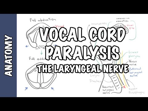 Laryngeal Nerve Palsy or Paralysis (Anatomy, physiology, classification, causes, pathophysiology)
