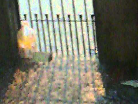 Chuva!!!! Em Cubatão 6: Tempestade infinita