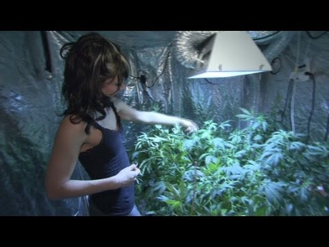 pot - While stores are unable to sell marijuana, legal homemade pot is booming in Colorado. Jim Spellman meets one such grower. For more CNN videos, visit our site...