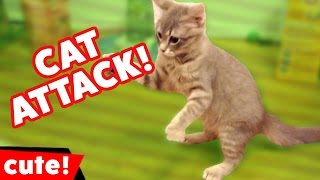 animale pisicile la atac