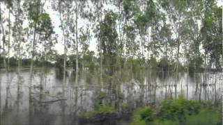 Pichit Thailand  city pictures gallery : Pichit : Hochwasser Thailand 09 / 2011