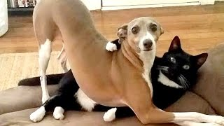 Video After this YOU'll WISH TO HAVE A DOG - Funny DOG compilation MP3, 3GP, MP4, WEBM, AVI, FLV Maret 2018